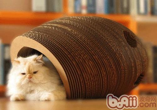 猫咪需求不止一张床