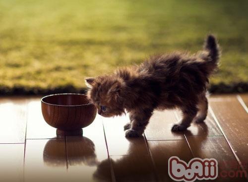 猫咪为什么不爱吃甜食