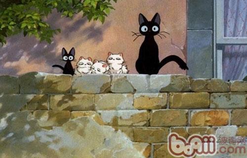 一个人可一起养几只猫咪