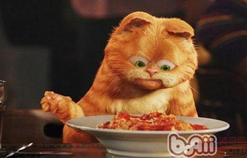 不要给猫咪喂你吃的饭菜