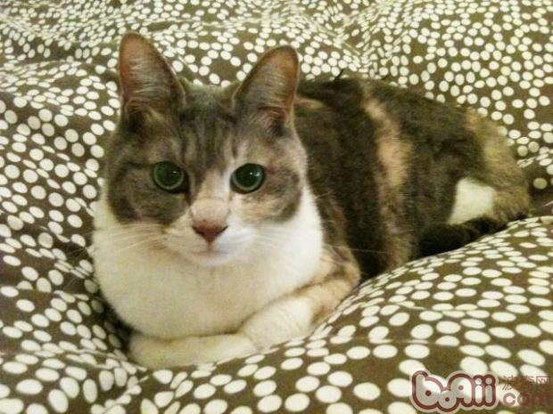 怎么处理宠物猫跳上床的习气
