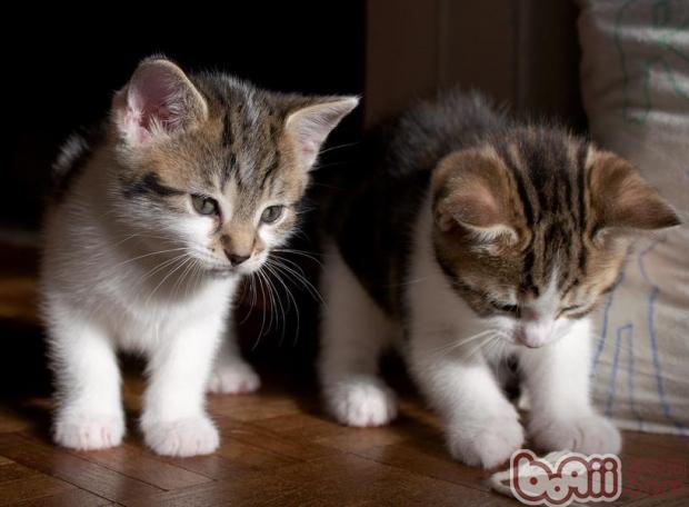 猫咪犯错后应该怎样调教