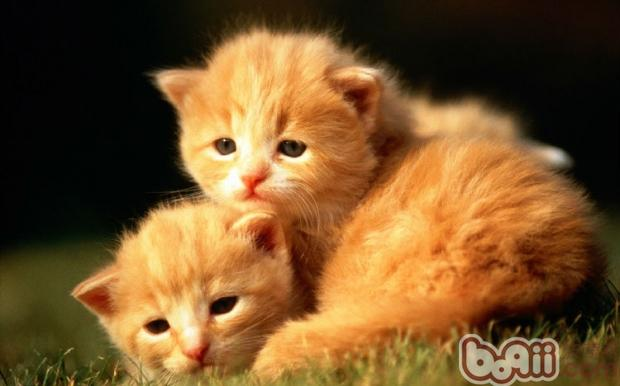 怎么让猫咪不再胆怯更有自傲