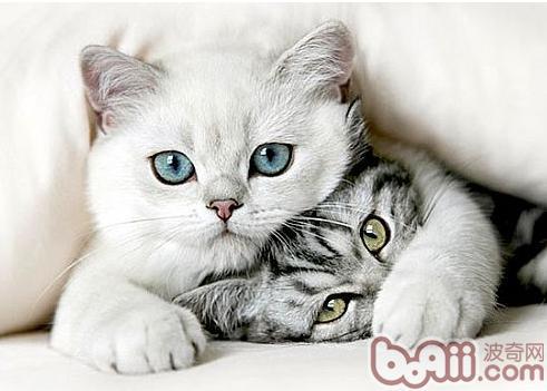 让猫咪不再惧怕交际的办法