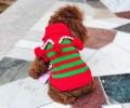 小狗出现感冒干咳的情况时,不抢救它会死吗