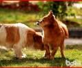 中华田园犬的眼屎多比较多是怎么回事造成 的?
