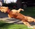 小狗肌肉训练的方式详细介绍