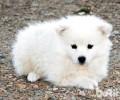 超好听的宠物狗名字有什么?超好听的宠物狗名字