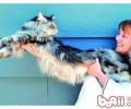 猫咪所发明的惊人世界纪录