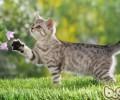 改进猫咪毛质的有用办法——户外运动