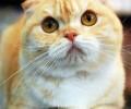 怀孕猫猫饮食需改进