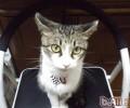 影响猫咪乱分泌的四个心理因素
