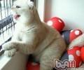 怎么阻挠猫咪用爪子抓墙面