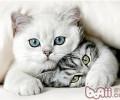 让猫咪不再惧怕交际的方法