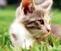 猫咪严重的体现有哪些?怎么缓解猫咪的严重感?
